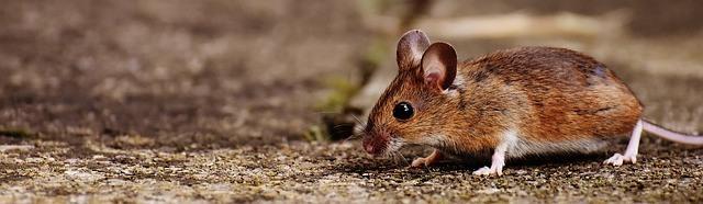 mouse-1708379_640 - Copy